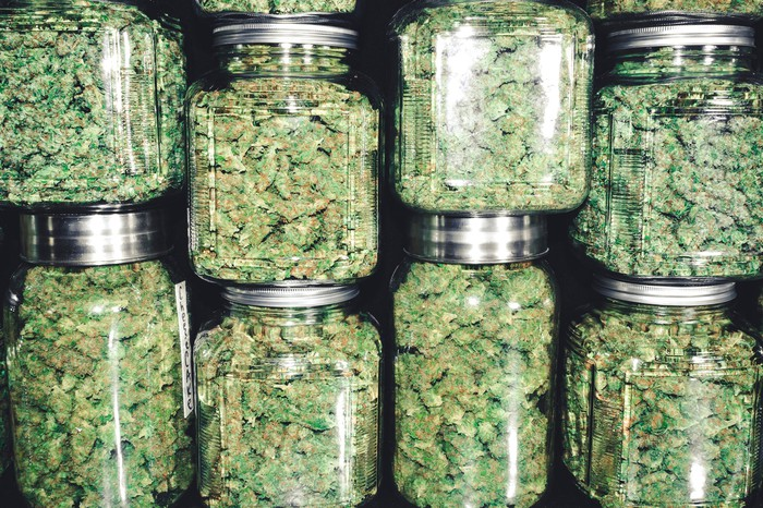 Stacks of sealed glass jars containing dried marijuana buds.