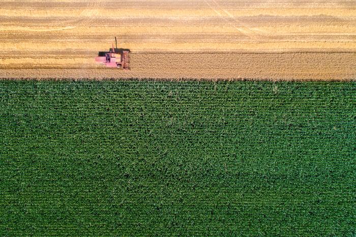A bird's-eye view of a corn field.