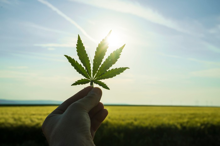 A hand holds a marijuana leaf up to the sun overhead in front of green farmland below.