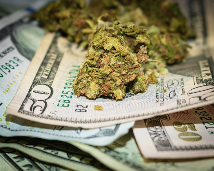 A handful of dried cannabis buds lying atop a messy pile of fifty dollar bills.