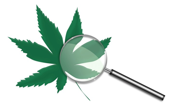 Magnifying glass on top of a cannabis leaf.