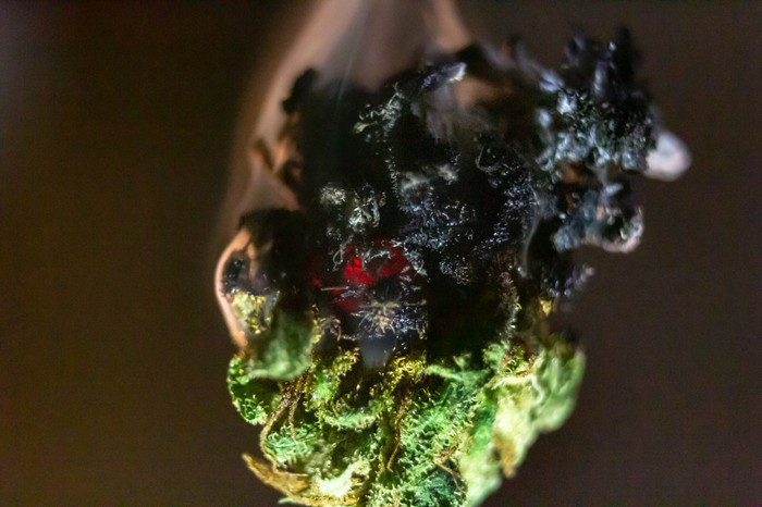 A smoldering cannabis bud that's partially turned black from the flame.