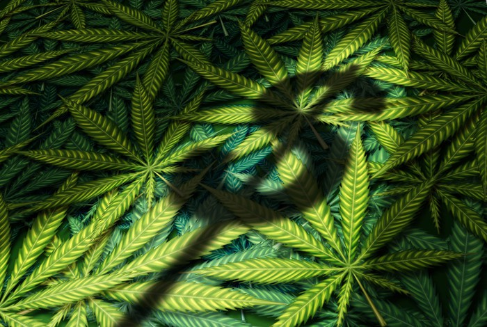 A dollar sign shadow being cast atop a pile of cannabis leaves.