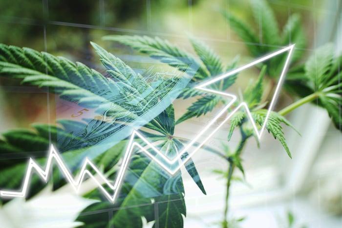 A marijuana leaf with a line superimposed over it.