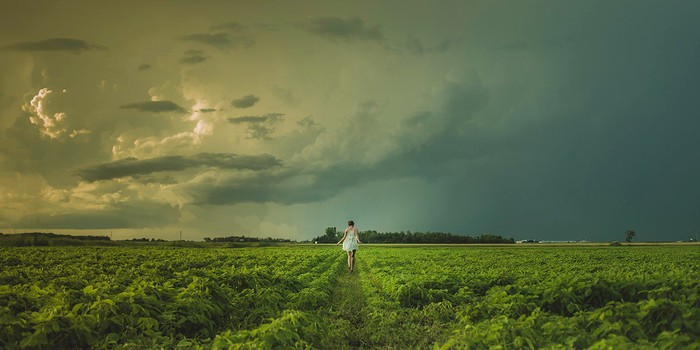 Tobacco farm with person standing in a row, on a stormy day.