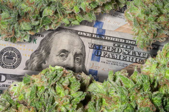 Marijuana buds above a $100 bill
