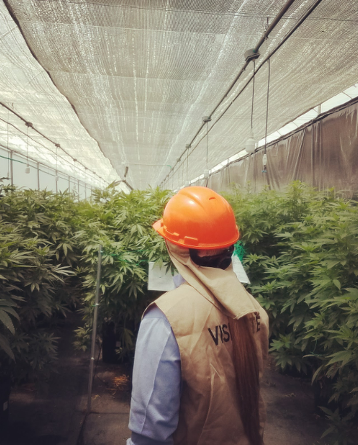 The author inspecting a marijuana grow facility in Latin America