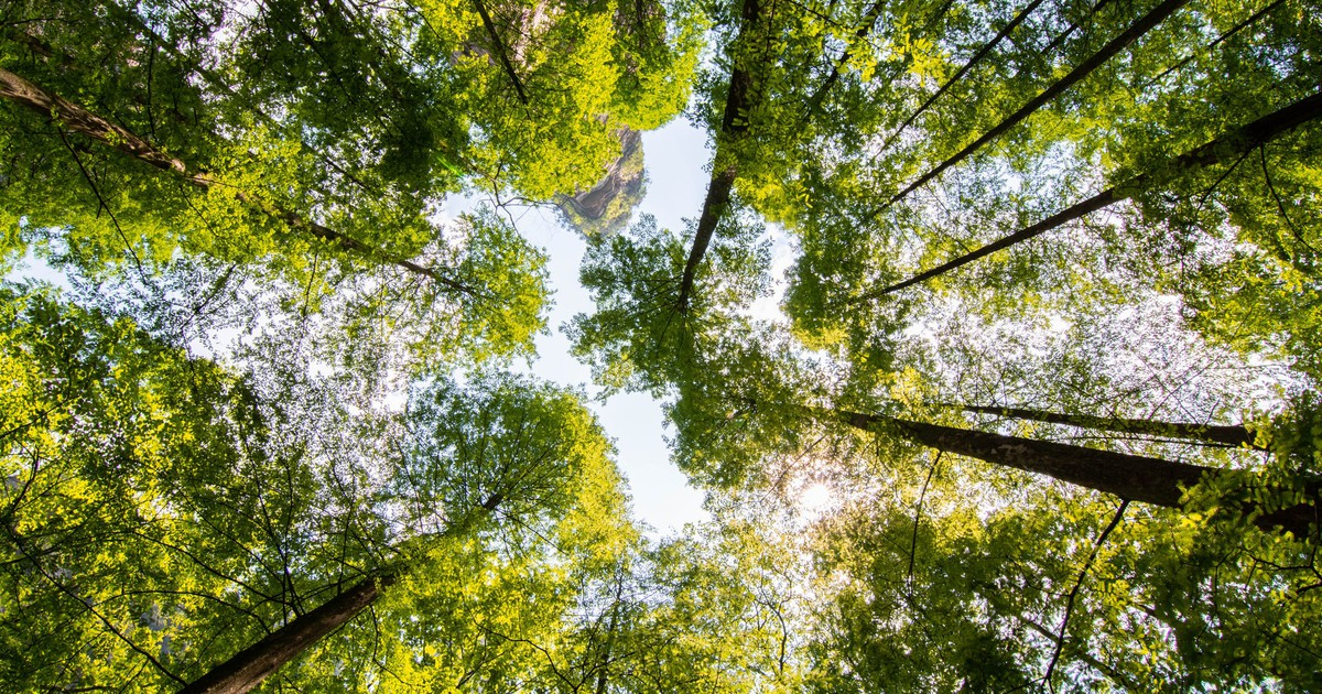 How to Invest in Timber REITs