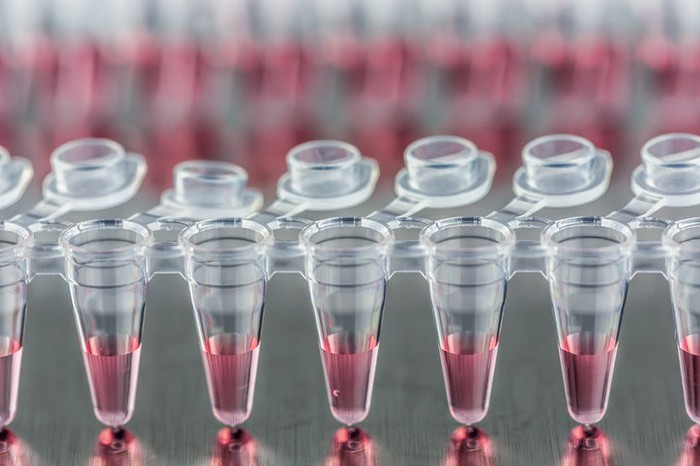 Transfer tubes in a lab with red liquids in them.