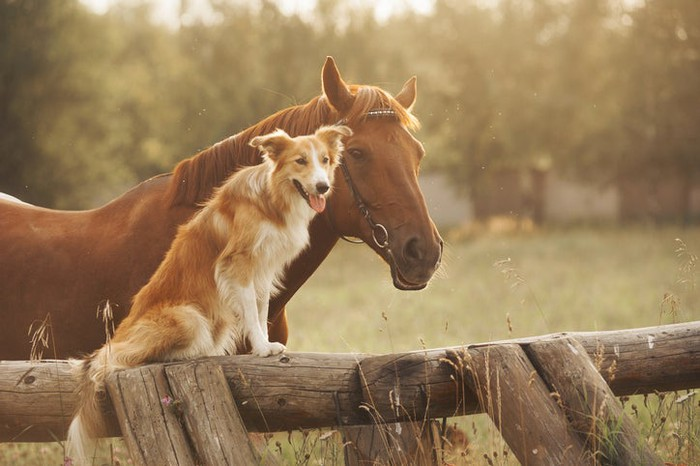 A horse and dog looking in the same direction.