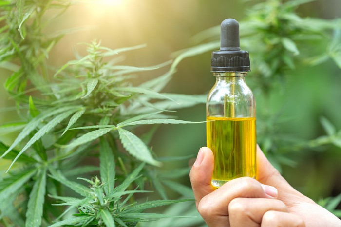 Hand holding CBD oil in a bottle with marijuana leaves in the background.