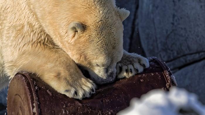 A polar bear gnaws at a rusty metal barrel