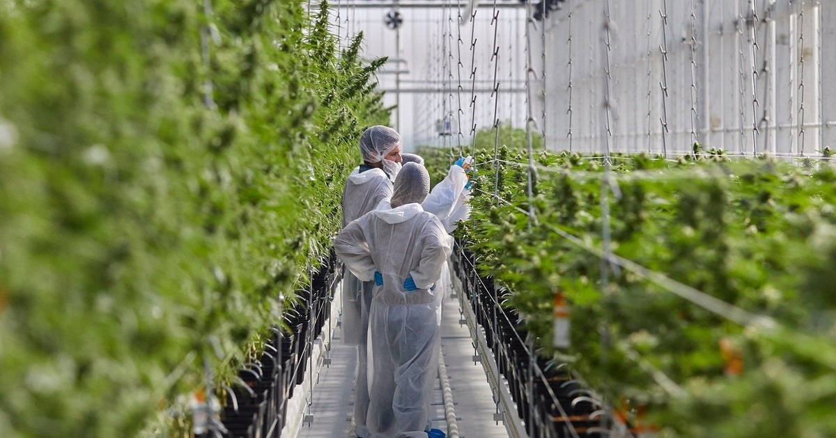 Why Tilray, Splunk, and Retrophin Slumped Today