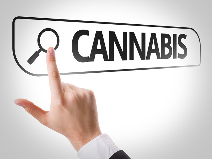 "Finger touching image of magnifying glass on a search text box containing the word ""cannabis"""