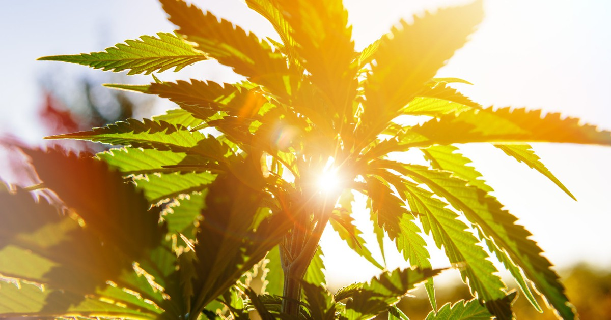 Weekly Cannabis Stock News: Canopy Growth Gets a Recommendation Boost