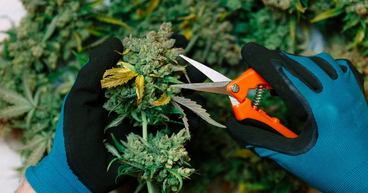 Only These 10 Pot Stocks Ended August Higher