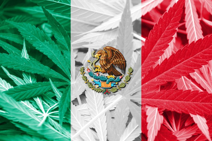 The Mexican flag colors and seal superimposed atop a bed of cannabis leaves.