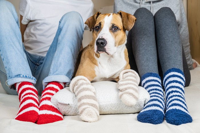 A dog sitting between a man and women, all three wearing woolen socks on their feet (paws)