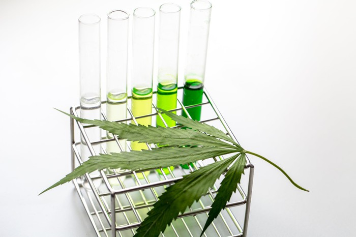 Five test tubes in a rack with a cannabis leaf on top of the rack.