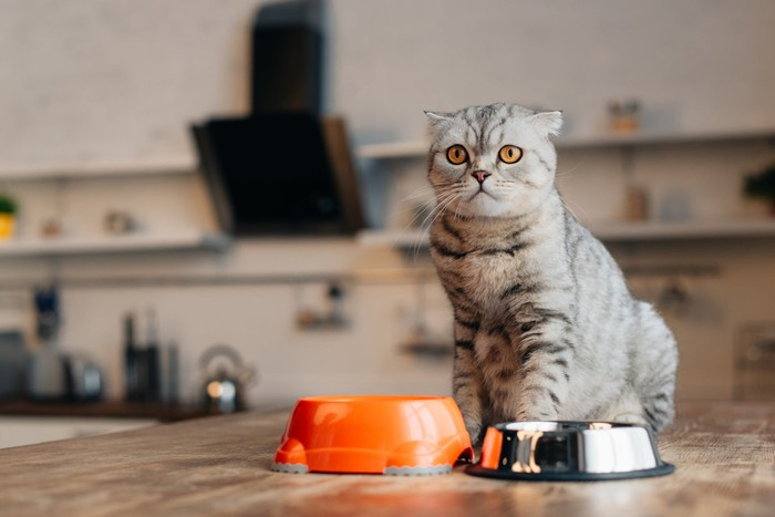 A house cat appears to be impatient as it perches on a kitchen table and waits for food in its bowl.