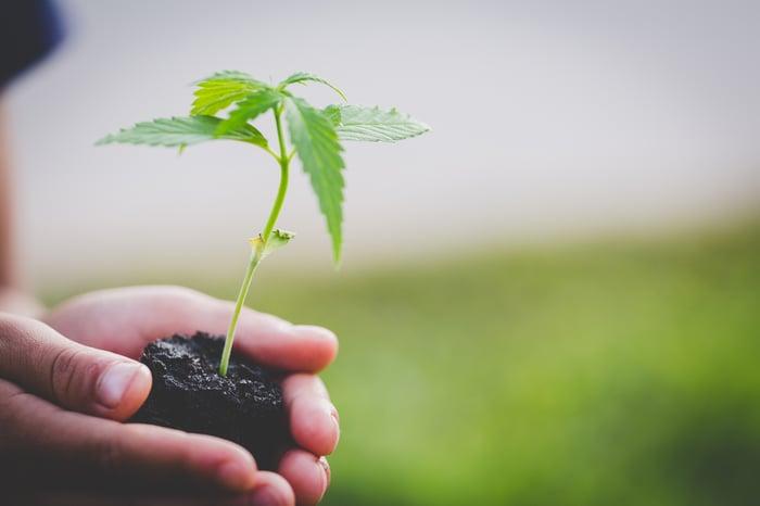 A farmer holding a baby pot plant.