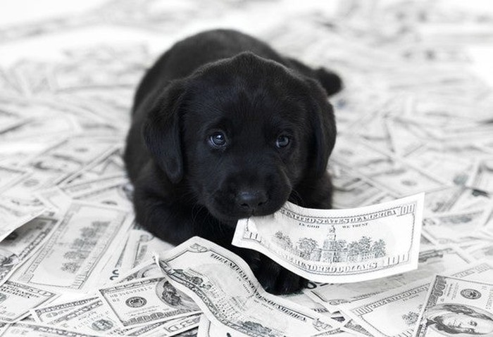 puppy eating dollars