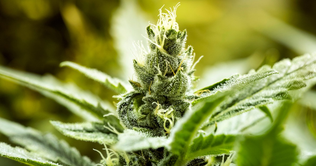 2 Pot Stocks That Are Better Buys Than Aurora Cannabis