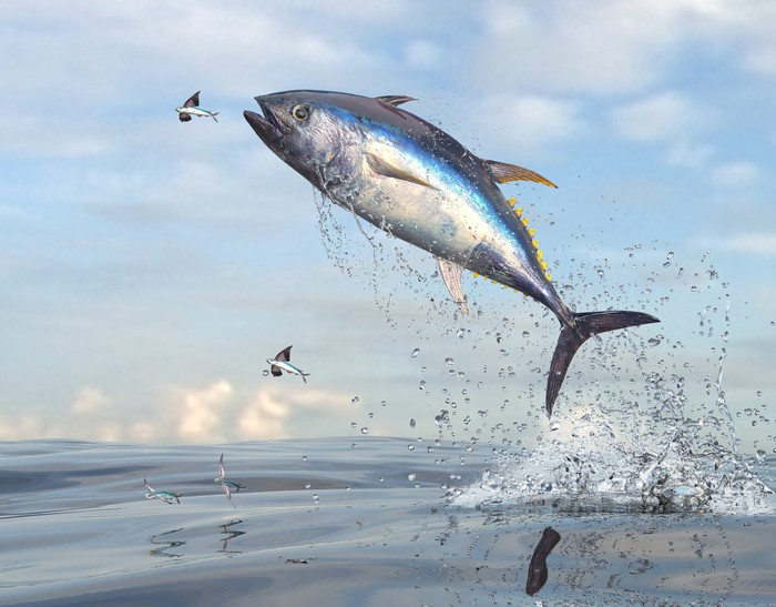 A silver fish leaping out of the water.