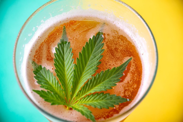 A cannabis leaf on top of a beer-like drink inside a glass