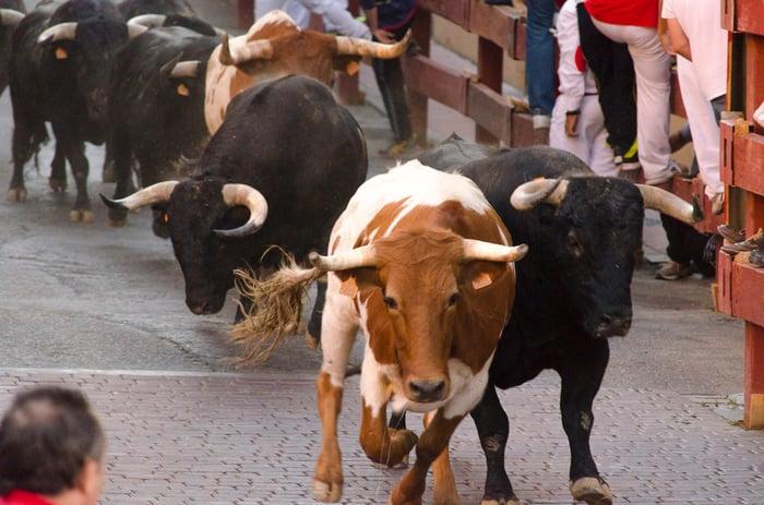 Running of the bulls.