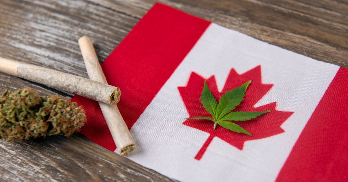 It's on Like Donkey Kong: The Marijuana Price Wars Have Begun in Canada
