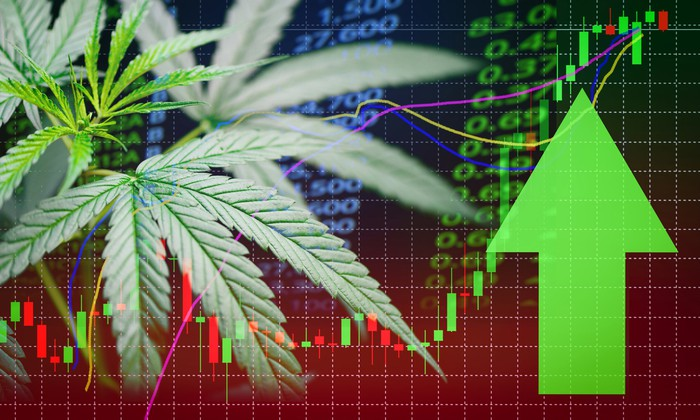 Cannabis plant next to a green arrow pointing up with stock charts and prices in the background