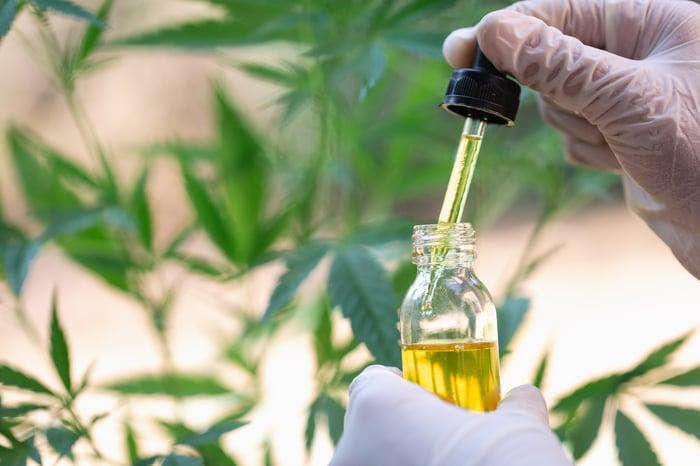 CBD oil being displayed in front of marijuana plants