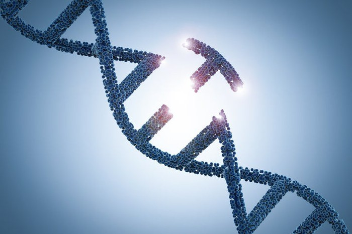 A double helix of DNA with one base pair removed.