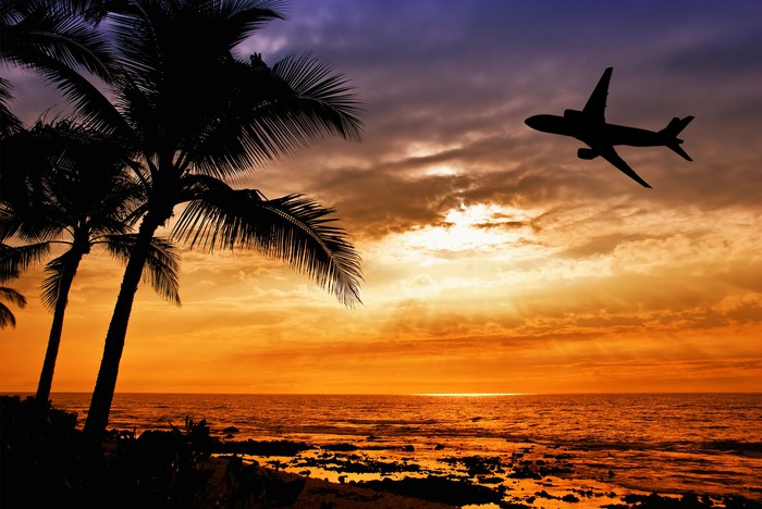 Sunset with palm tree and airplane silhouette