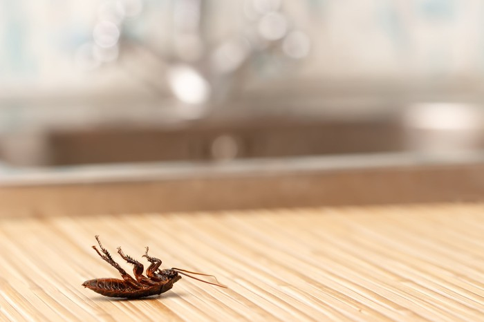 A dead cockroach on a counter.