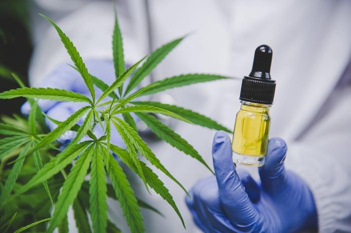 Scientist holding a CBD bottle next to a cannabis plant