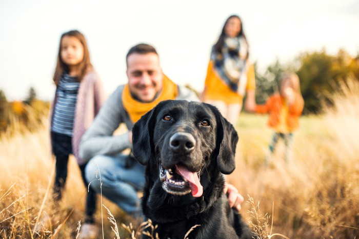 Black lab in focus in field with family blurred out in the background