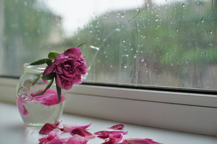 A wilting pink flower in a vase next to a window splattered with rain.