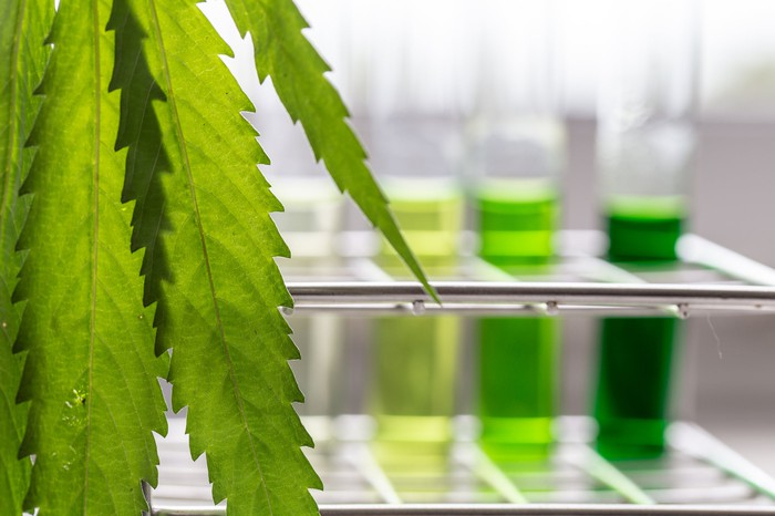 Cannabis leaf in foreground with test tubes containing green liquids in the background
