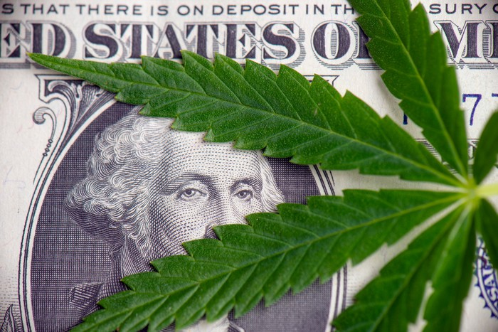 A cannabis leaf lying atop a one dollar bill, with George Washington's face peering between the leaves.