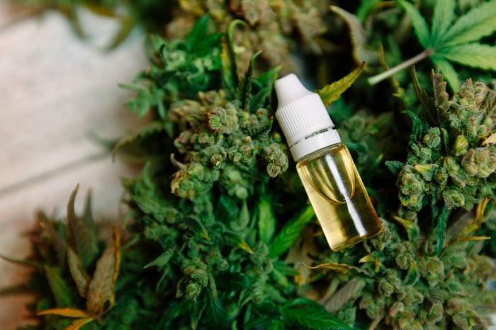 A small vial of cannabinoid-rich liquid lying atop an assortment of cannabis flowers.