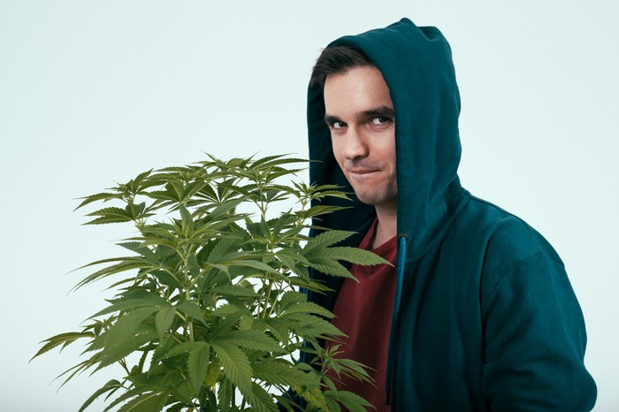 A suspicious-looking young man in a blue hooded sweatshirt who's holding a potted cannabis plant.