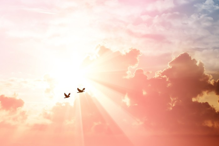 2 birds flying against the sun.