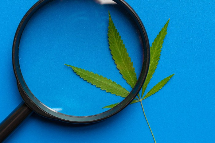 Magnifying glass on top of cannabis leaf
