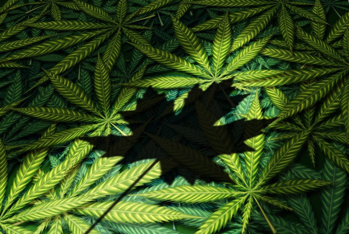 Shadow of a Canadian maple leaf on top of a pile of cannabis leaves