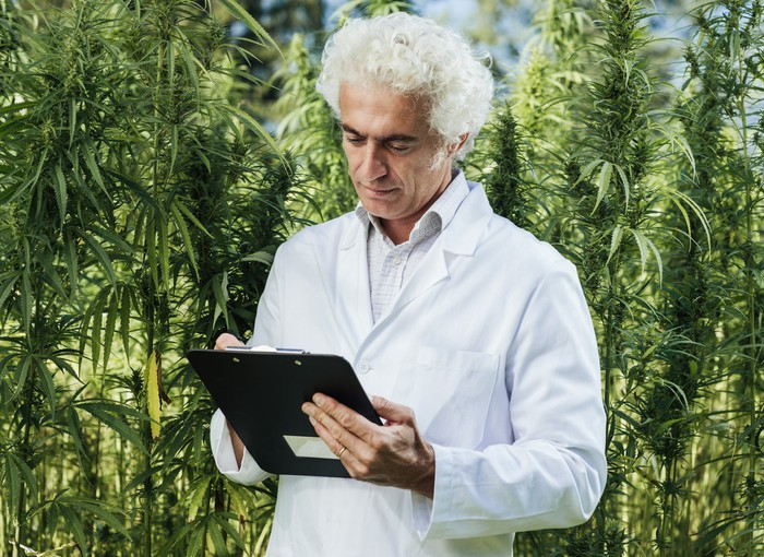 A researcher in a white lab coat making notes on a clipboard in the middle of an outdoor hemp grow farm.