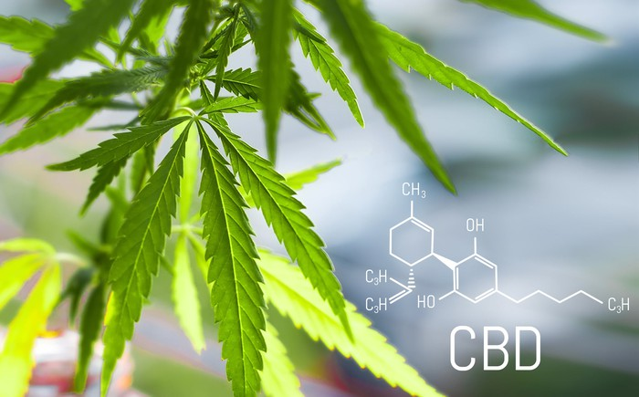 Cannabis plant next to a diagram of the chemical structure of CBD