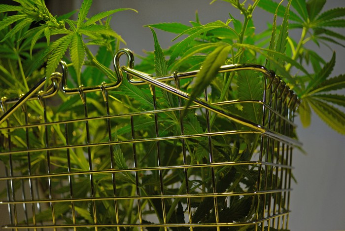 A metal basket filled with an assortment of cannabis leaves.