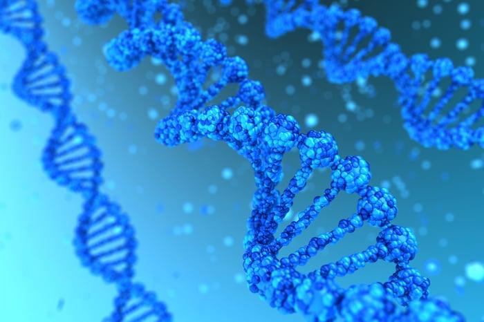 Strands of DNA.